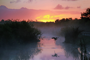 Travelers Visiting Everglades National Park Can Now Buy Passes In Advance Online At No Additional Cost