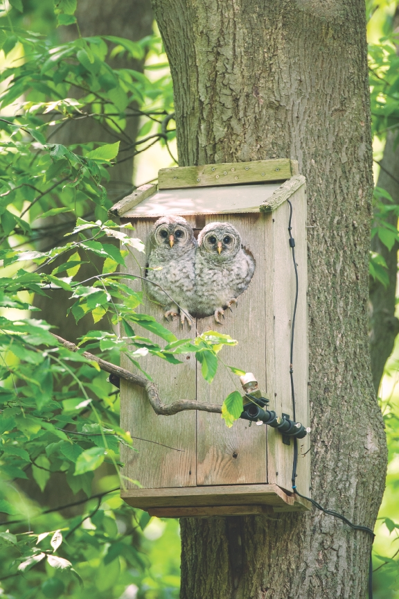 Wild Birds Unlimited Owl Nest Cam – It's a Real Hoot!