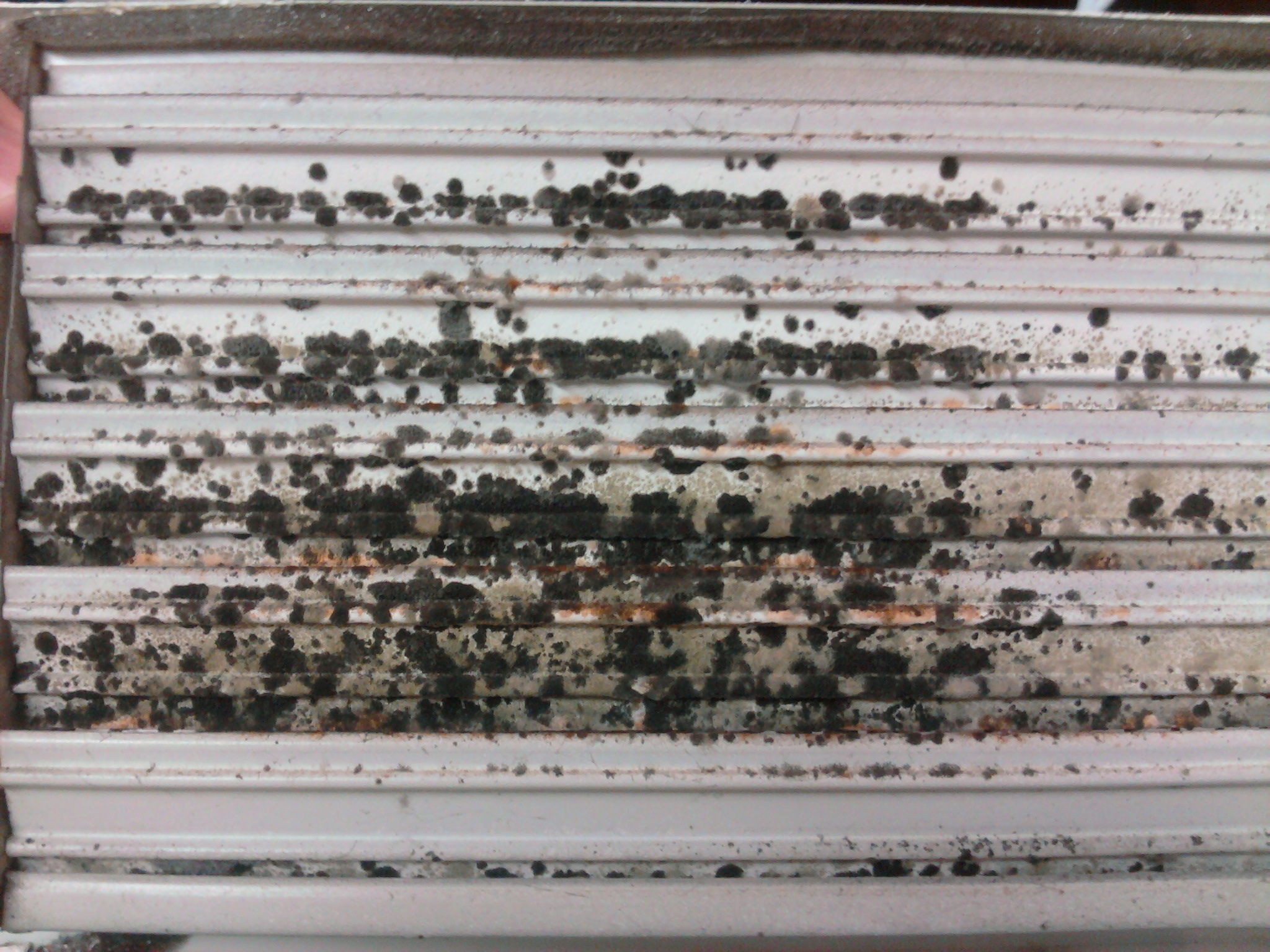 winter is time to decontaminate toxic mold growth inside